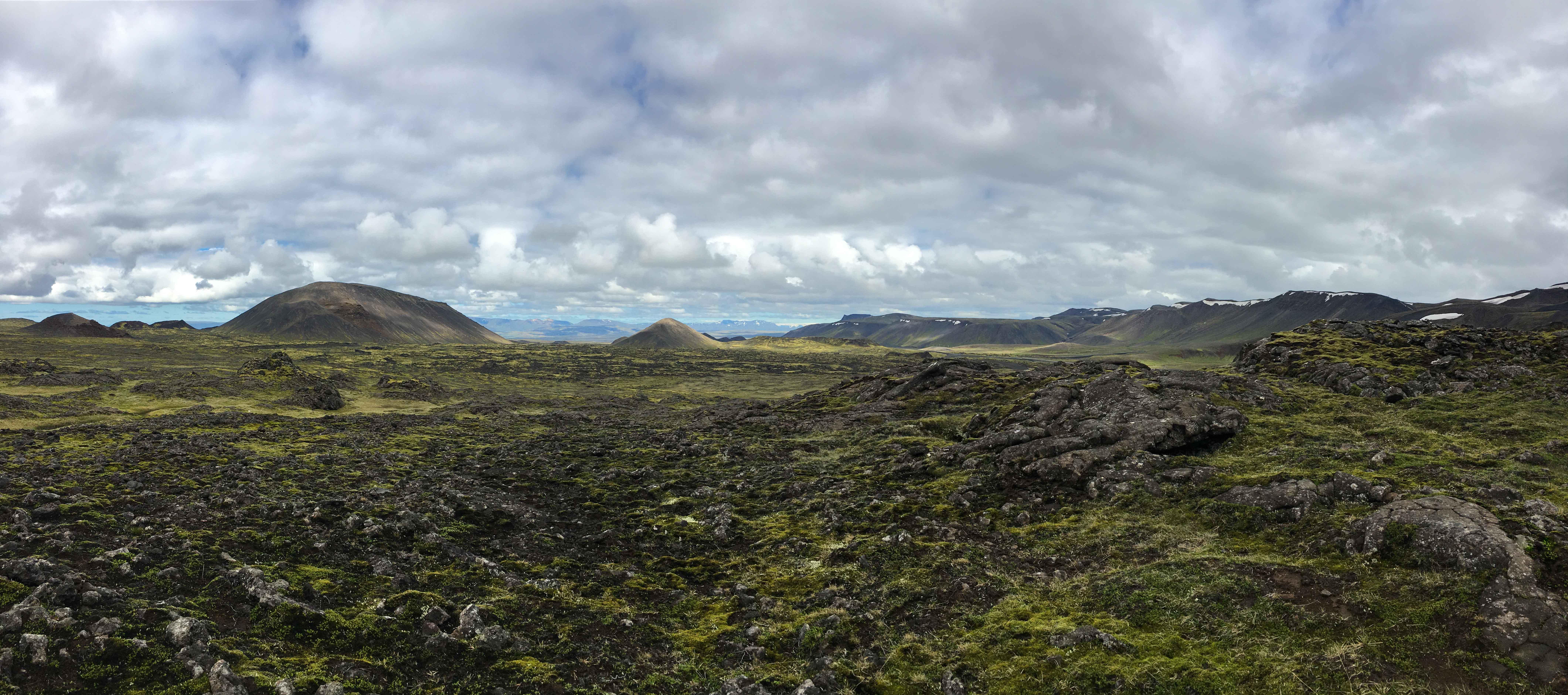 Iceland's vegetation