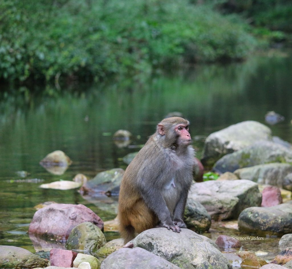 Zhangjiajie monkey river