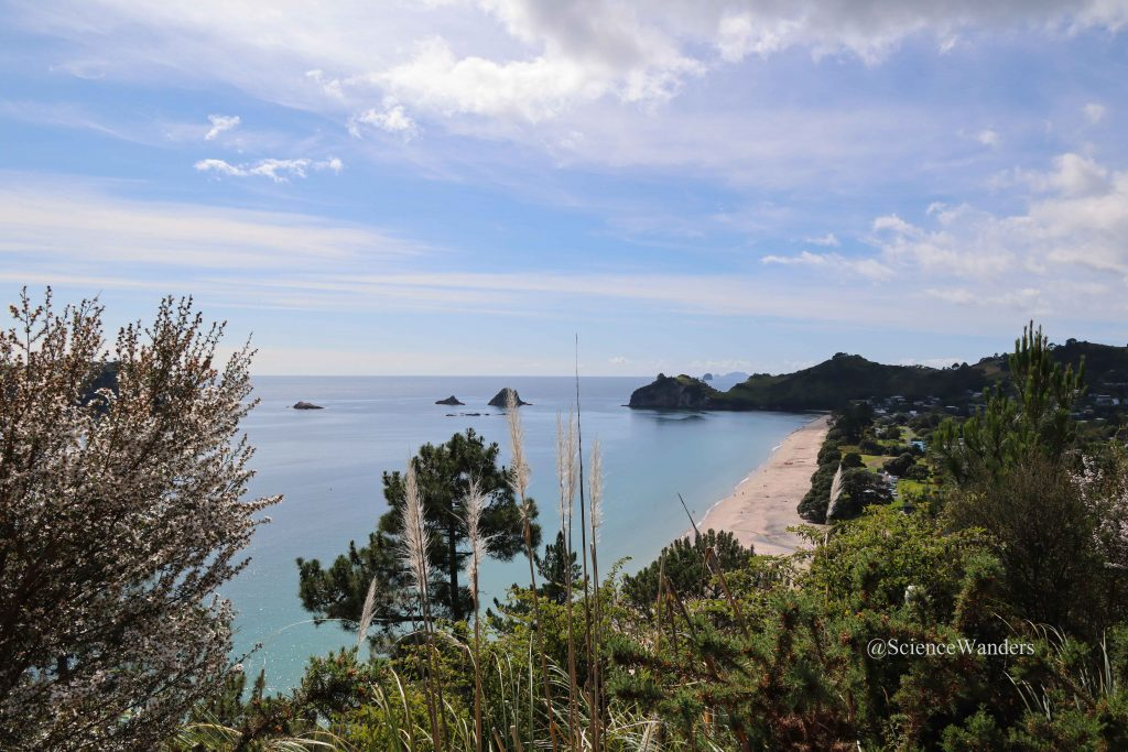 Cathedral Cove track