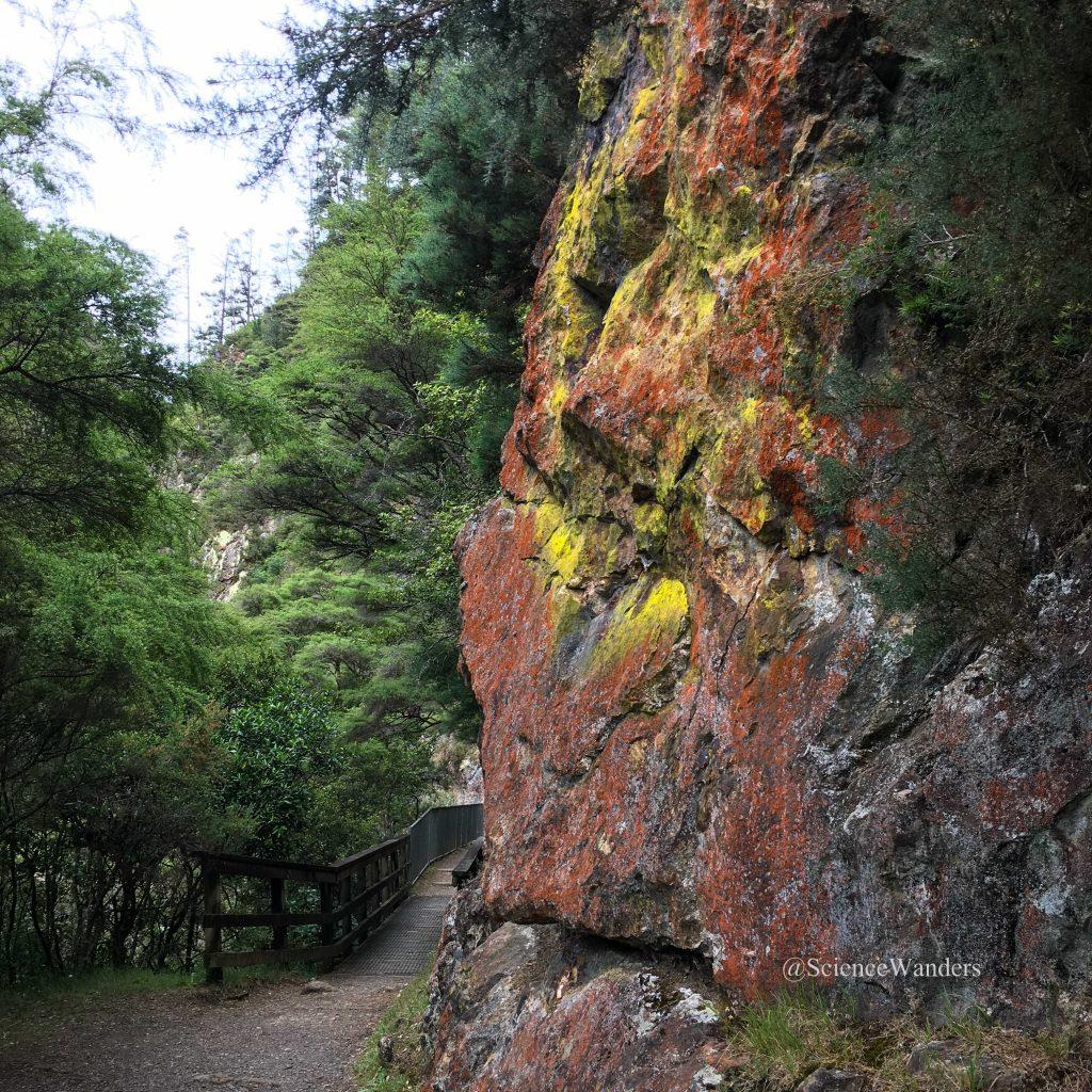 Lichen in Karangahake