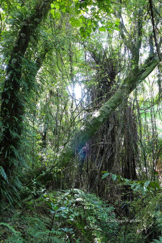 Papaitonga Scenic Reserve