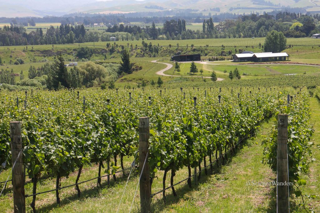 Waipara valley vineyard trail