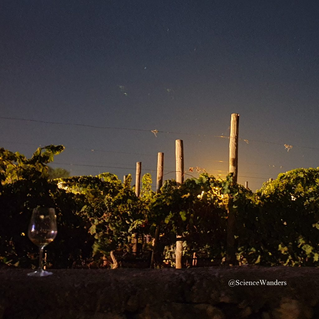 Marnisi under the stars, Marsaxlokk vineyard